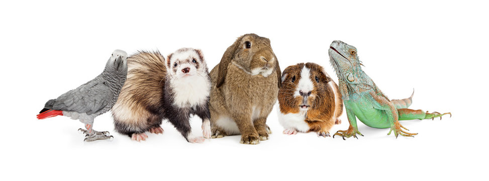 Group of Small Domestic Pets Over White