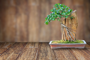Bonsai tree in a ceramic pot on a wooden floor