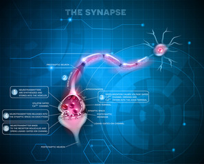 Synapse detailed anatomy, abstract technology background. Neuron passes signal to another neuron.