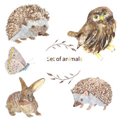 Set of animals. Owl, hedgehog, butterfly, Bunny set of animals, watercolor drawing. For the design of postcards, baby clothes and t-shirt prints.