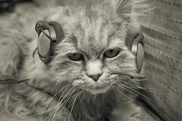Cat listening to music