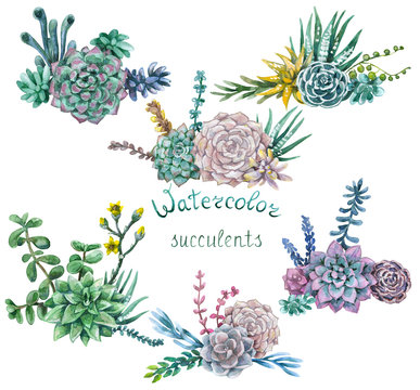 Set of watercolor bunches of succulents