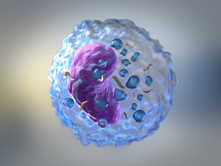 Lymphocytes are white blood cells or leucocytes in the human imm
