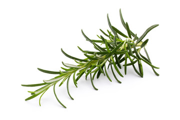Rosemary twig on the isolated white background.