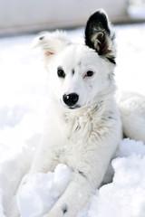 Un cane sulla neve