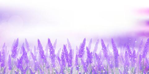 ラベンダー 花 風景 背景