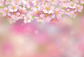 Vector blossoming sakura tree, pink bokeh background.