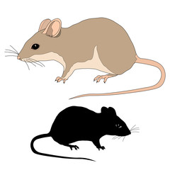Rat realistic black silhouette isolated vector illustration