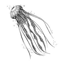 Sketch medusa. styling. Hand drawn. Illustration vector