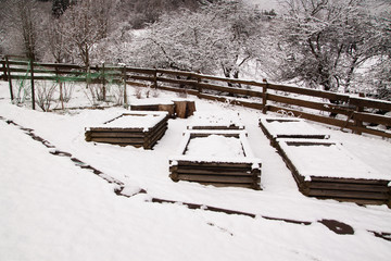 resting snow covered raised vegetable beds in the cold winter in countryside garden