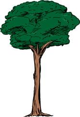 Isolated Tall Tree Illustration