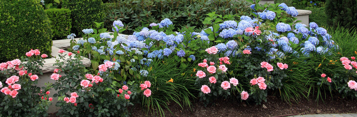 Summer flower bed.