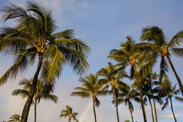 Palm trees with rainbow