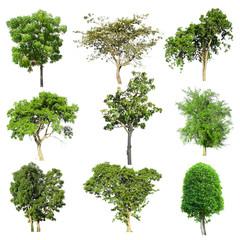 Tree image, Tree object, Tree JPG, Tree collection set isolated