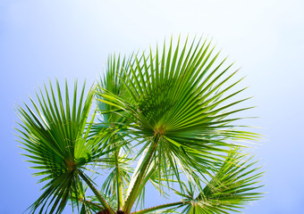 Palm tree against the sky with green leaves