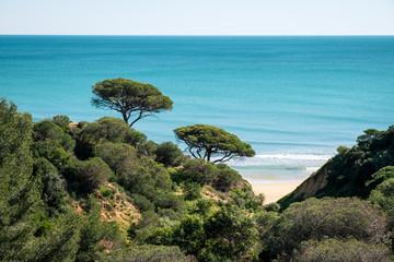 Zwei Bäume an der Küste, Portugal
