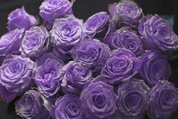 bilder und videos suchen lila rosen. Black Bedroom Furniture Sets. Home Design Ideas