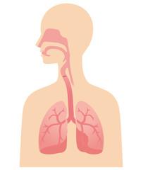 喉と肺 断面図 医学