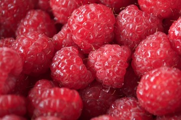 Ripe red raspberries with selective focus