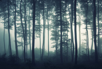 Wall Murals Forest edge of forest in mist