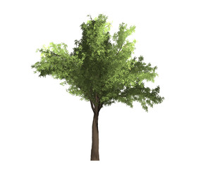 tree isolated background nature white green season life wood green botany