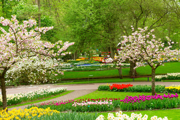 Foto op Plexiglas Tuin spring flowers in holland park