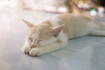a cat sleeping with light flare and bokeh