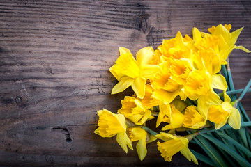 Bunch of yellow daffodils with blossom