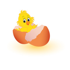 chicken in the egg shell isolated on white background