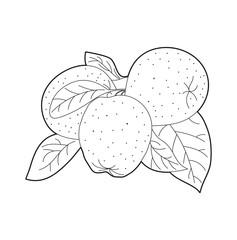 Set of apples vector, set di mele in bianco e nero vettoriali