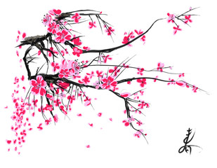 Realistic sakura blossom - Japanese cherry tree isolated on white background