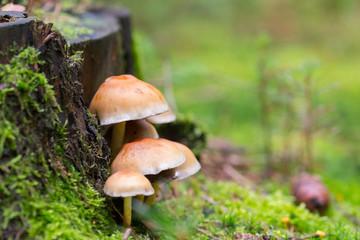 mushrooms on tree trunk