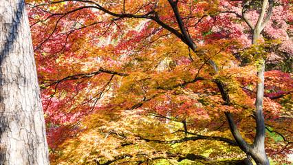 Beautiful season at the Hirosaki Castle Park in Hirosaki, Aomori