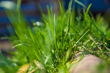Fresh spring grass / Grass, Green Color, Sunlight, Defocused, Close-up