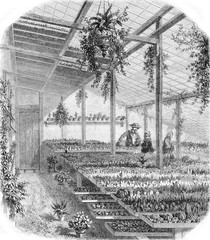 A Greenhouse of succulents in Paris, vintage engraving.