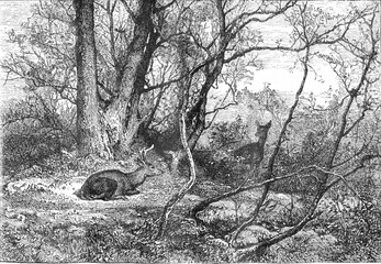 Deer, vintage engraving.