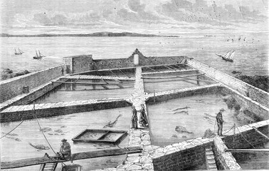 The former fish farm at Concarneau, vintage engraving.