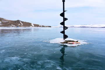 Fish caught while winter fishing on ice in the middle of a frozen lake Baikal