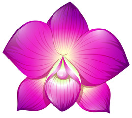 Orchid in purple color
