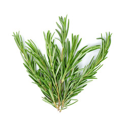 rosemary isolated on the white background