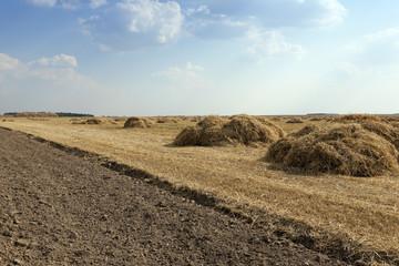 cereal harvest, summer
