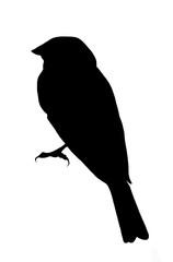 Finch Silhouette - black