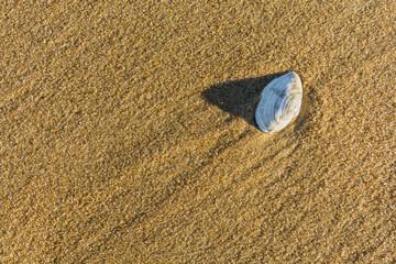 Seashell on the beach.