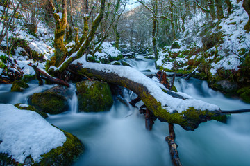 snowy river with mossy trunk
