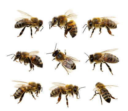 Set of bee