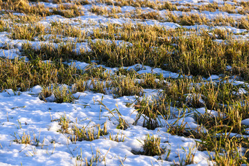 winter season, the snow