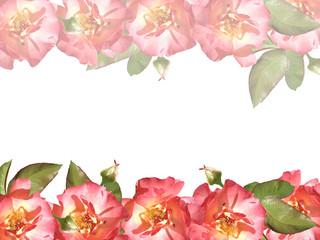 Floral background. Roses