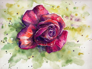 Dark red rose head original watercolor illustration