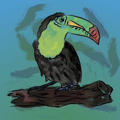 Watercolor toucan bird. Vector illustration