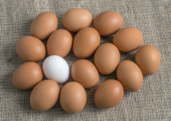 chicken eggs, laid out in the form of one large egg